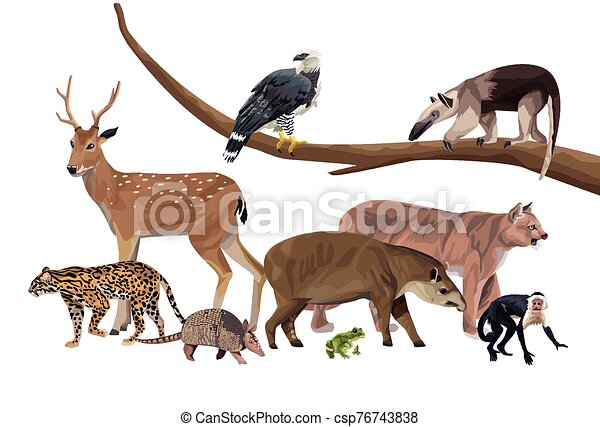 group of wild animals characters - csp76743838