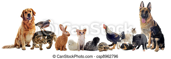 groupe, animaux familiers - csp8962796