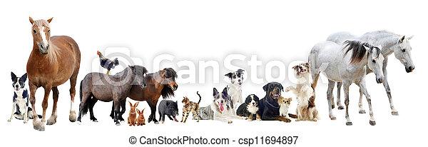 groupe, animaux - csp11694897