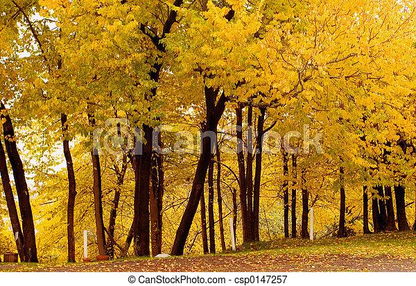 grove1, upadek, korek, kolor, wiąz - csp0147257