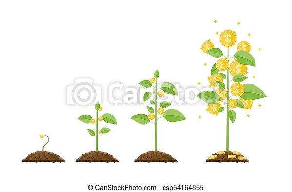 Growing money tree. Stages of growing. - csp54164855