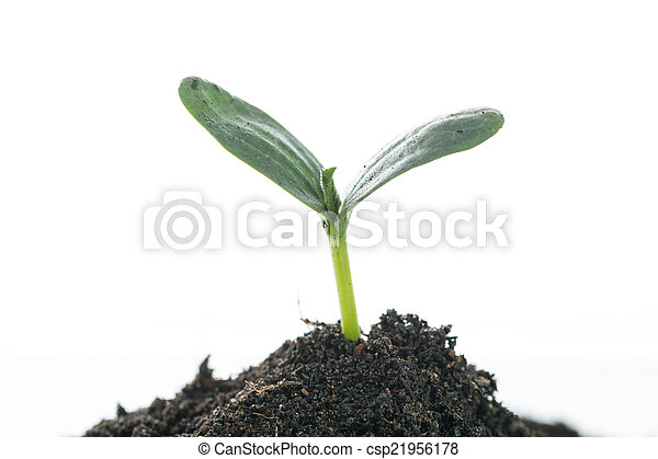 Growing plant - csp21956178