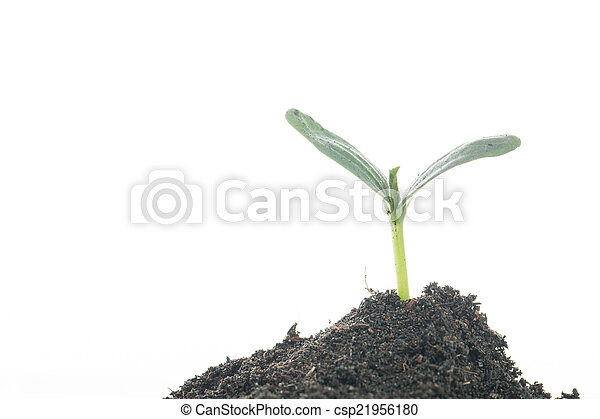 Growing plant - csp21956180