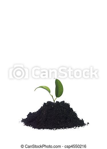 Growing plant - csp4550216
