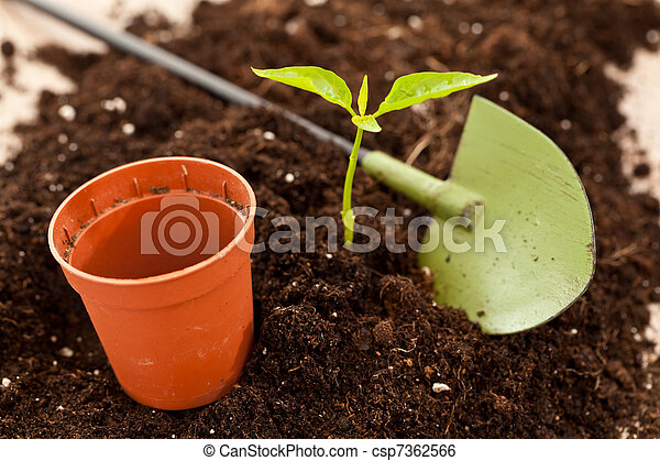growing plant - csp7362566