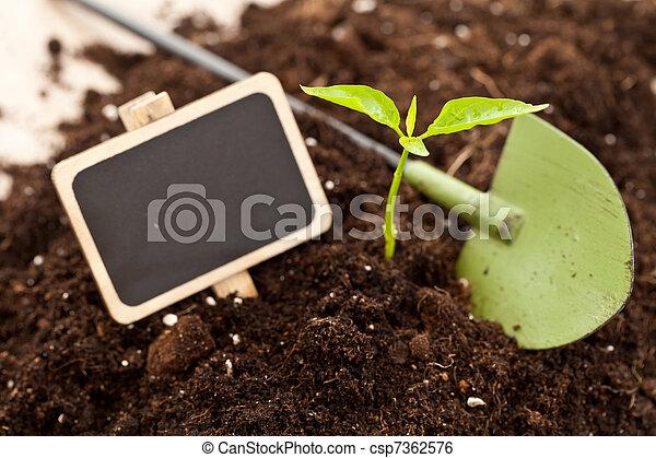 growing plant - csp7362576