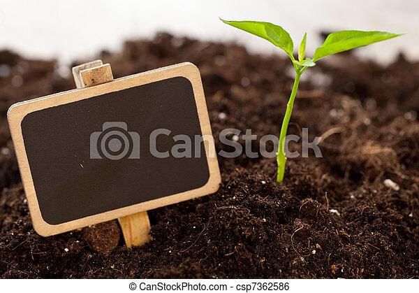 growing plant - csp7362586