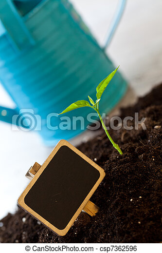 growing plant - csp7362596