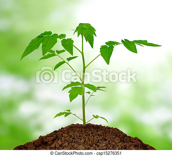 growing plant - csp15276351