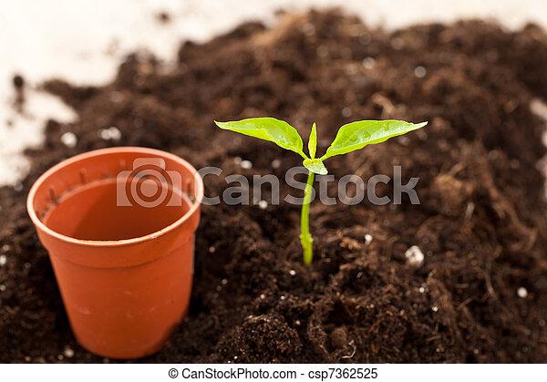 growing plant - csp7362525