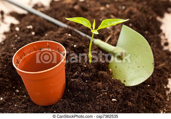 growing plant - csp7362535
