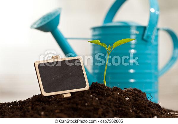 growing plant - csp7362605