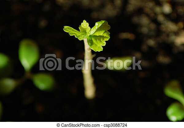 growing plant - csp3088724