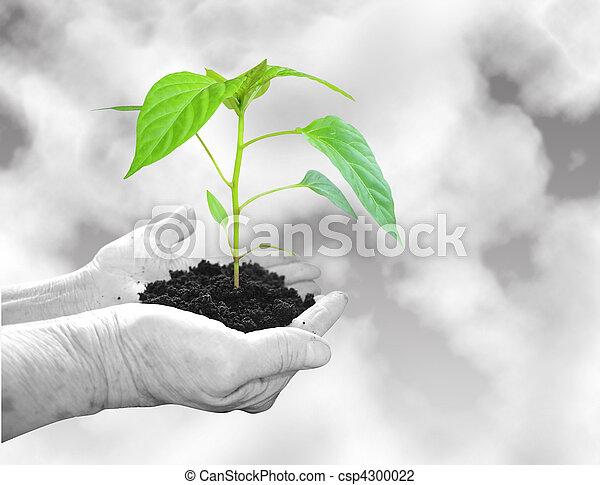 Growing plant - csp4300022