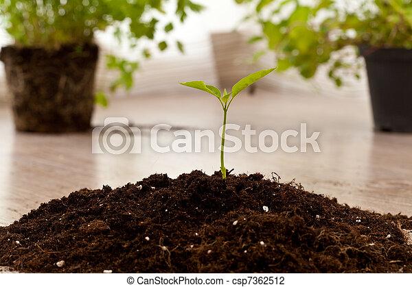 growing plant - csp7362512