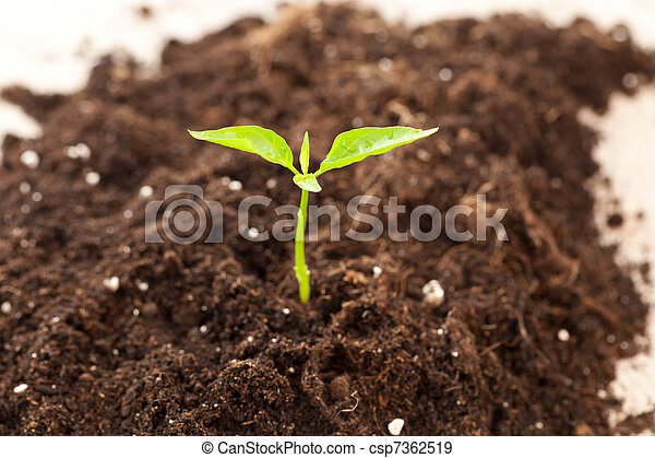 growing plant - csp7362519