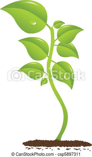 Growing plant - csp5897311