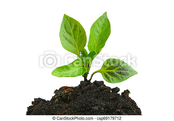Growing young green plant and soil isolated on white - csp69179712