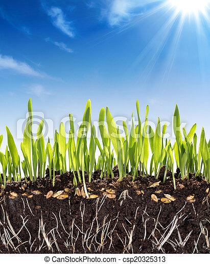 growth concept - background - soil - csp20325313