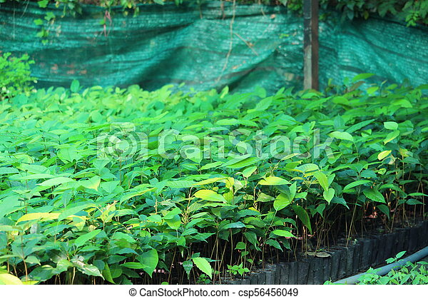 Growth of trees in the garden - csp56456049