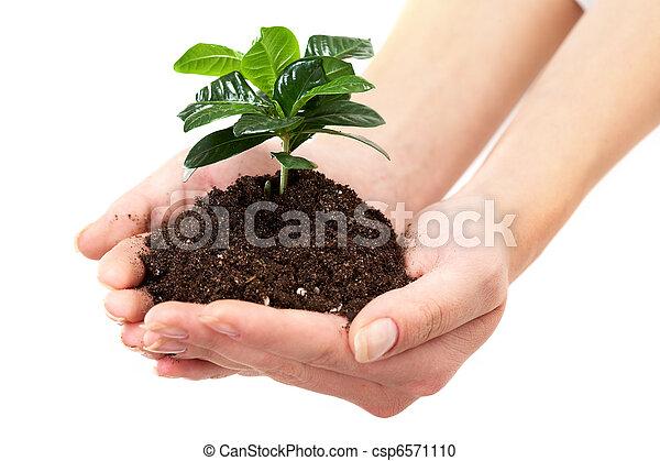 Growth - csp6571110
