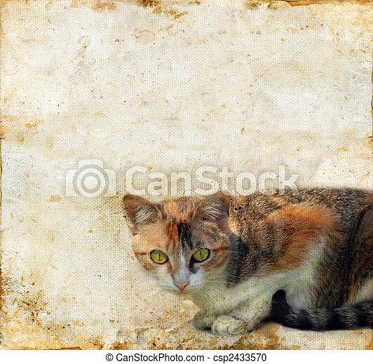grunge, achtergrond, kat - csp2433570