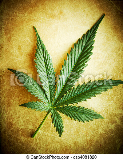 grunge, dof., superficial, cannabis, plano de fondo, hoja - csp4081820