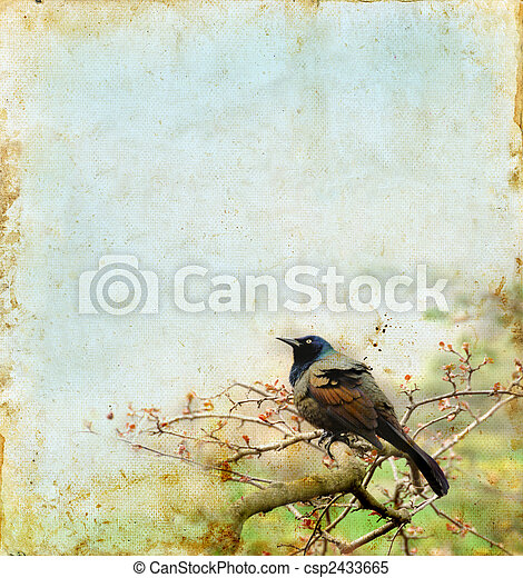 grunge, filiálka, grafické pozadí, ptáček - csp2433665