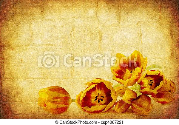 Grunge Tulips - csp4067221