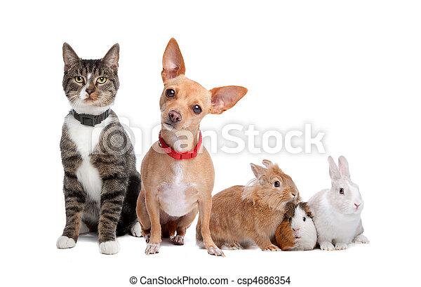 grupo, mascotas - csp4686354