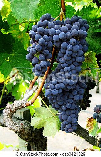Grupo de uvas - csp0421529