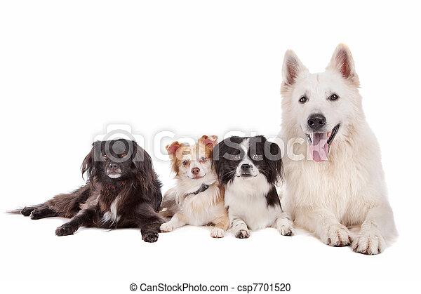gruppe, hunden - csp7701520