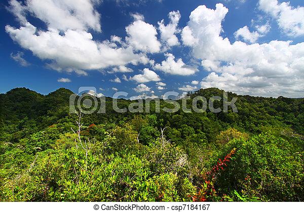 Guajataca Forest Reserve - Puerto Rico - csp7184167