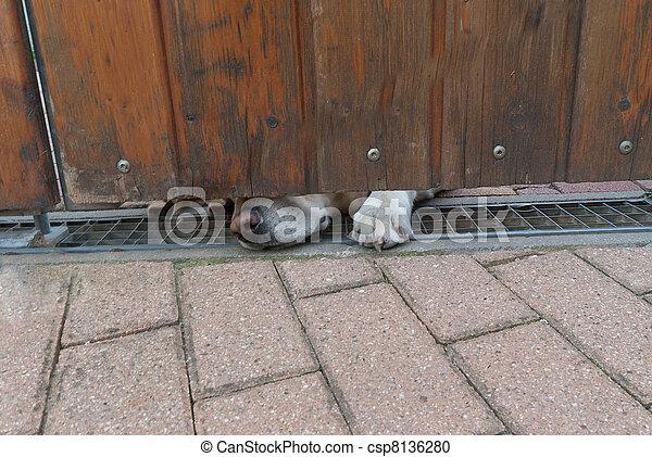 Guard dog sniffing under a door - csp8136280