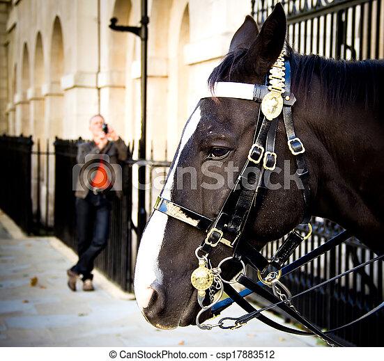 Guard horse in London - csp17883512