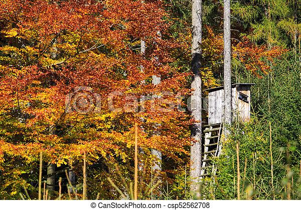 Guet Colore Chasse Bois Feuilles Arbres Automne Bois Tour
