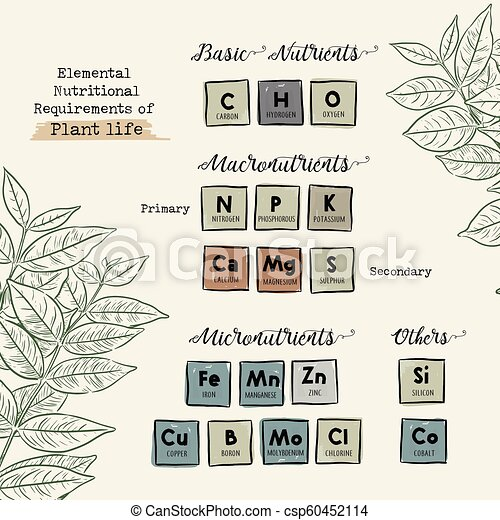 Guide Of Macronutrients And Micronutrients For Plants Vector Elemental Nutritional Requirements Of Plant Life Hand Draw