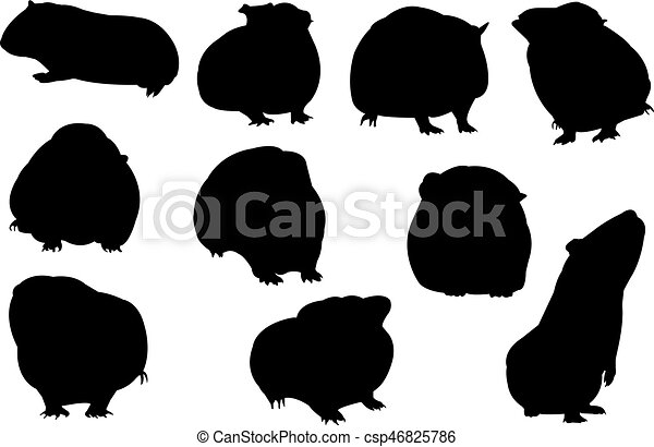 guinea pig silhouette vector illustration vector search clipart pig wig clip art piggy