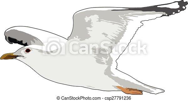 gull - csp27791236