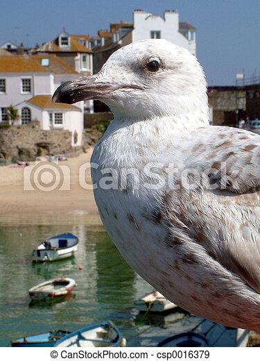 Gull profile - csp0016379