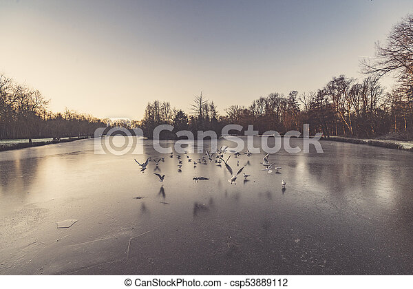Gulls flying over a frozen lake in the winter - csp53889112