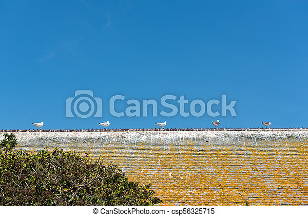 Gulls on an old slate house roof
