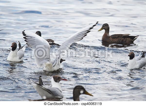 gulls on the lake - csp40083119