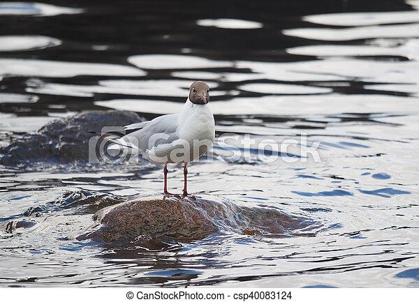 gulls on the lake - csp40083124