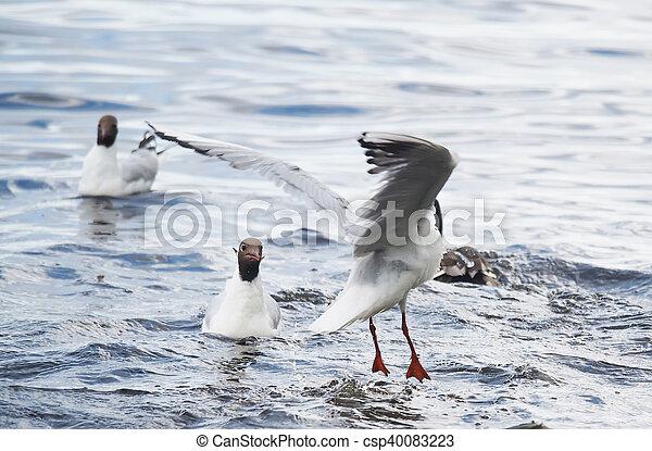 gulls on the lake - csp40083223