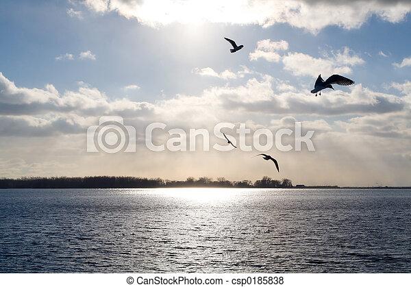 Gulls over a sunlit lake - csp0185838