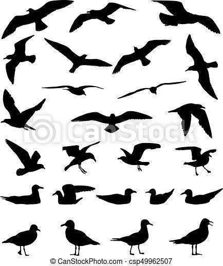 Gulls silhouette - csp49962507