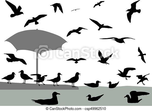 Gulls - csp49962510