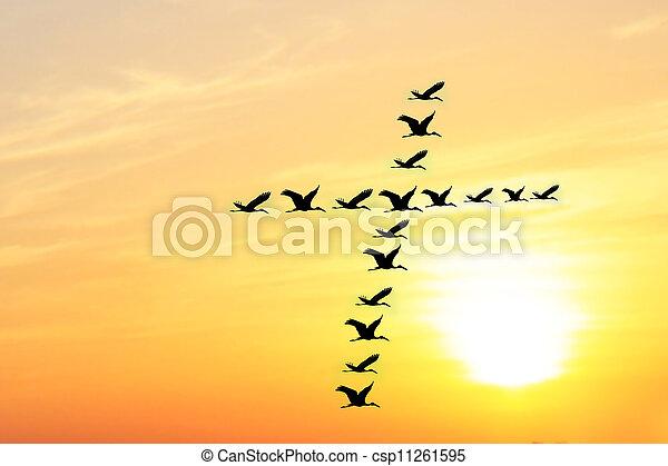 gyönyörű, összhang, irodalom, jámbor, fényesen, nap, &, ég, kereszt, együtt, harmony., slicc, alakít, beállítás, este, ők, alakítás, égi, madarak - csp11261595