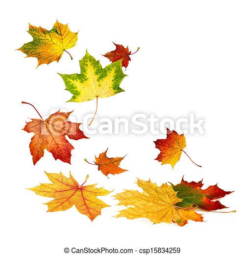 gyönyörű, ősz kilépő, elesik - csp15834259